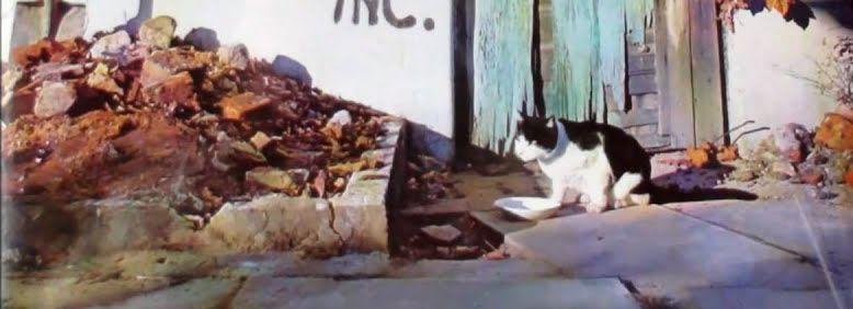 カケレコスタッフの日々是ロック:BIG PINK新譜CATSに関連して、綺羅びやかな各国サイケ・ポップを探求♪