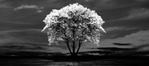 「1本の木」ジャケットのプログレ新鋭作品をピックアップ!
